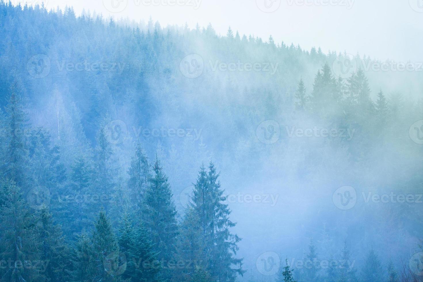 Bosque Misterioso 1318277 Foto De Stock En Vecteezy