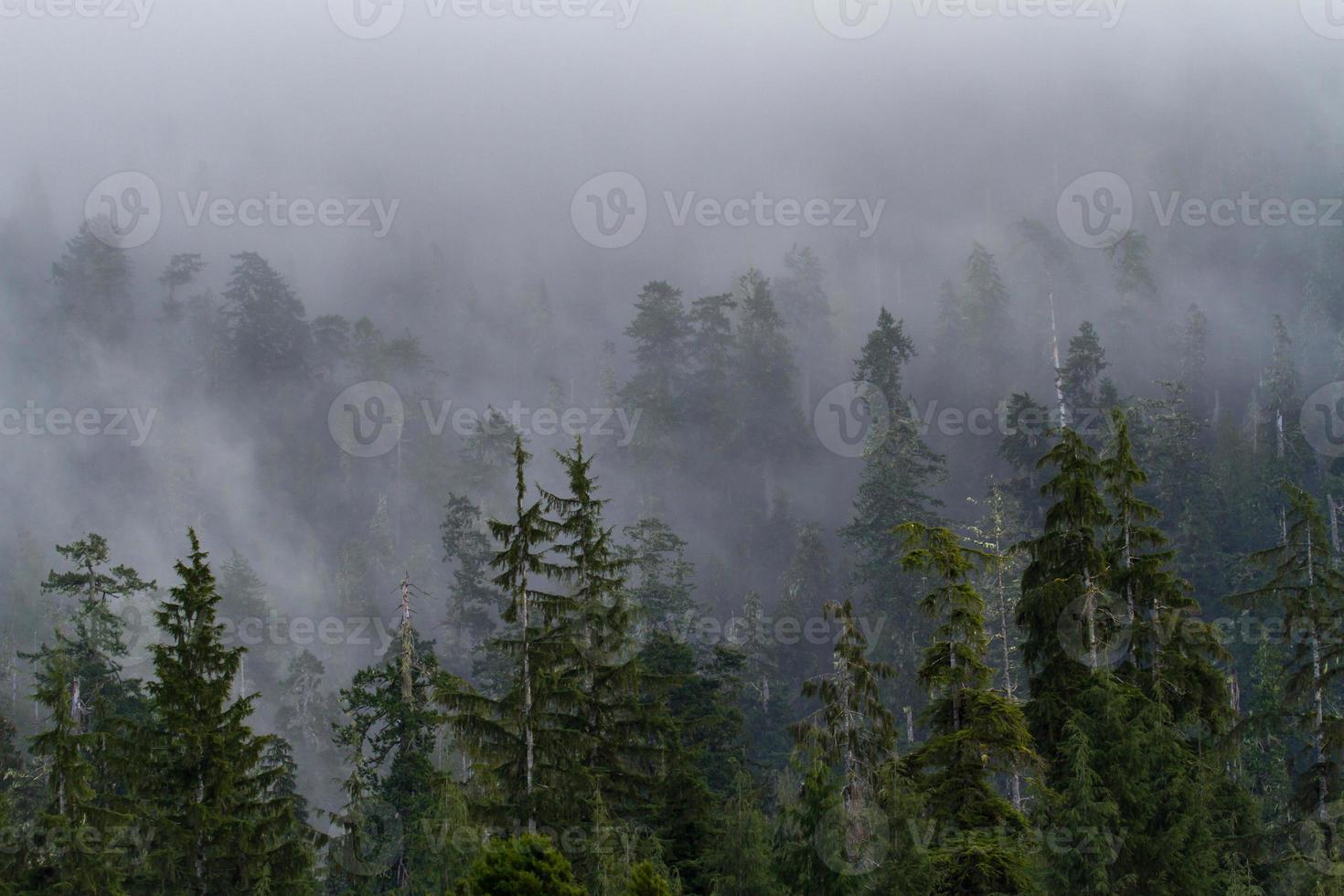 bosque brumoso de la mañana foto