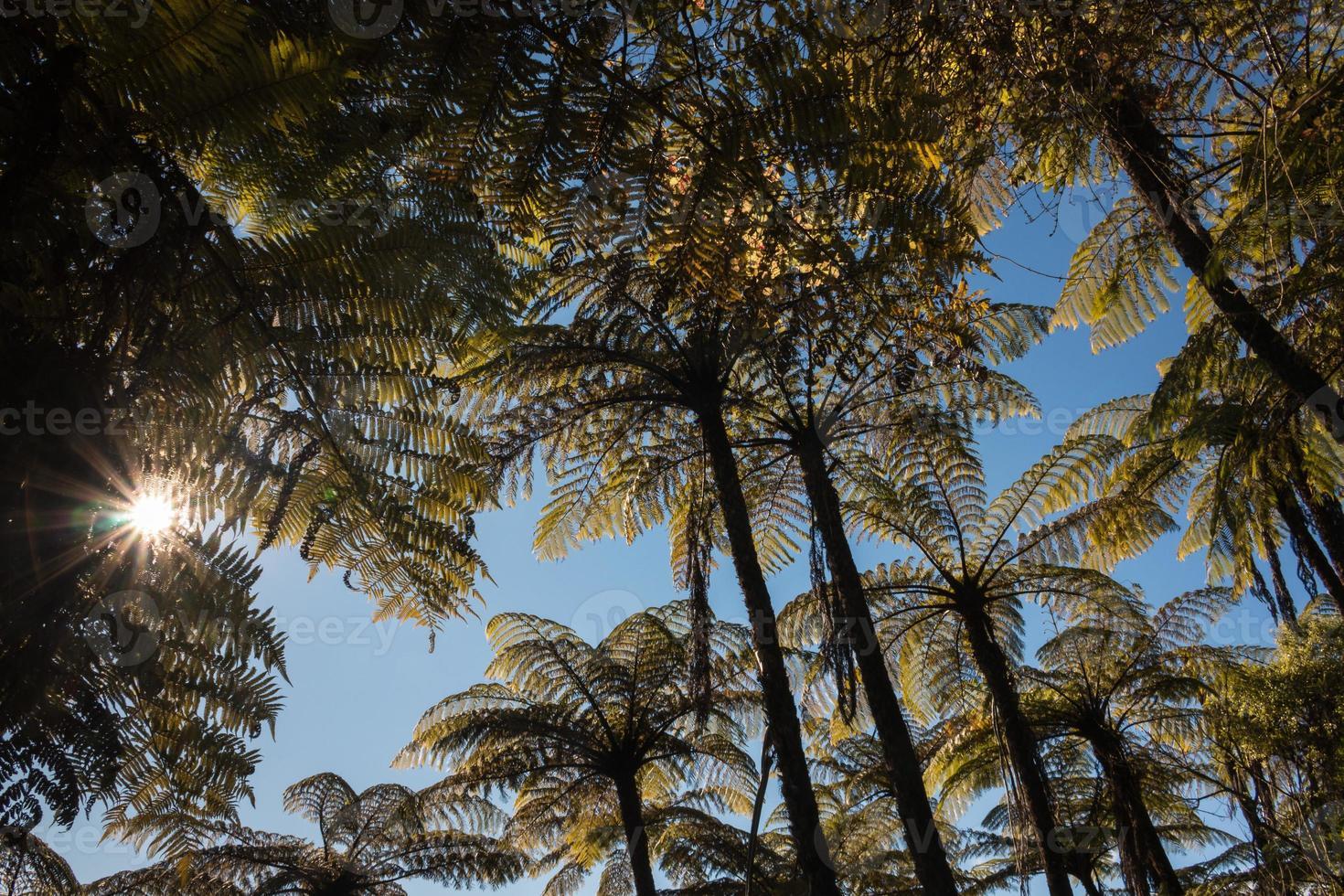 black tree fern forest photo