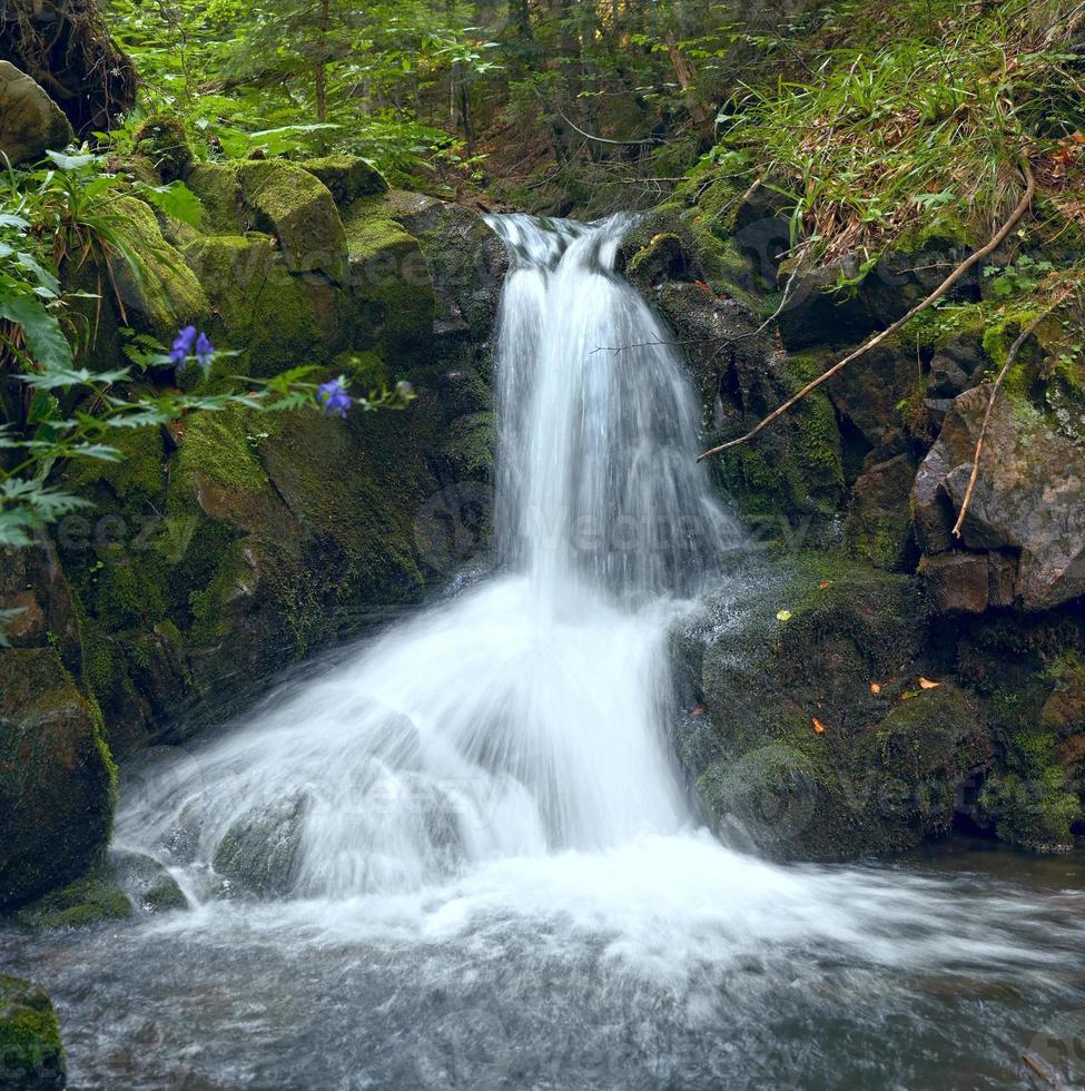 cascada en el bosque de montaña foto