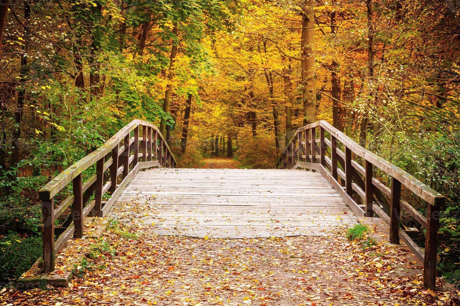 Bridge in autumn forest photo