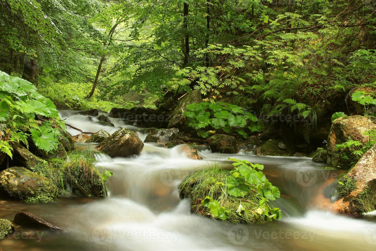 río que fluye a través del bosque foto