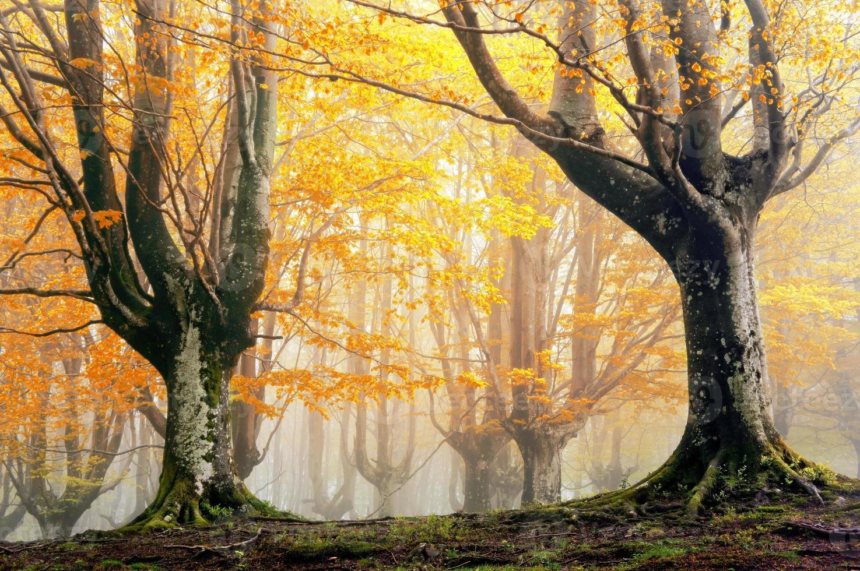 magic forest in autumn photo