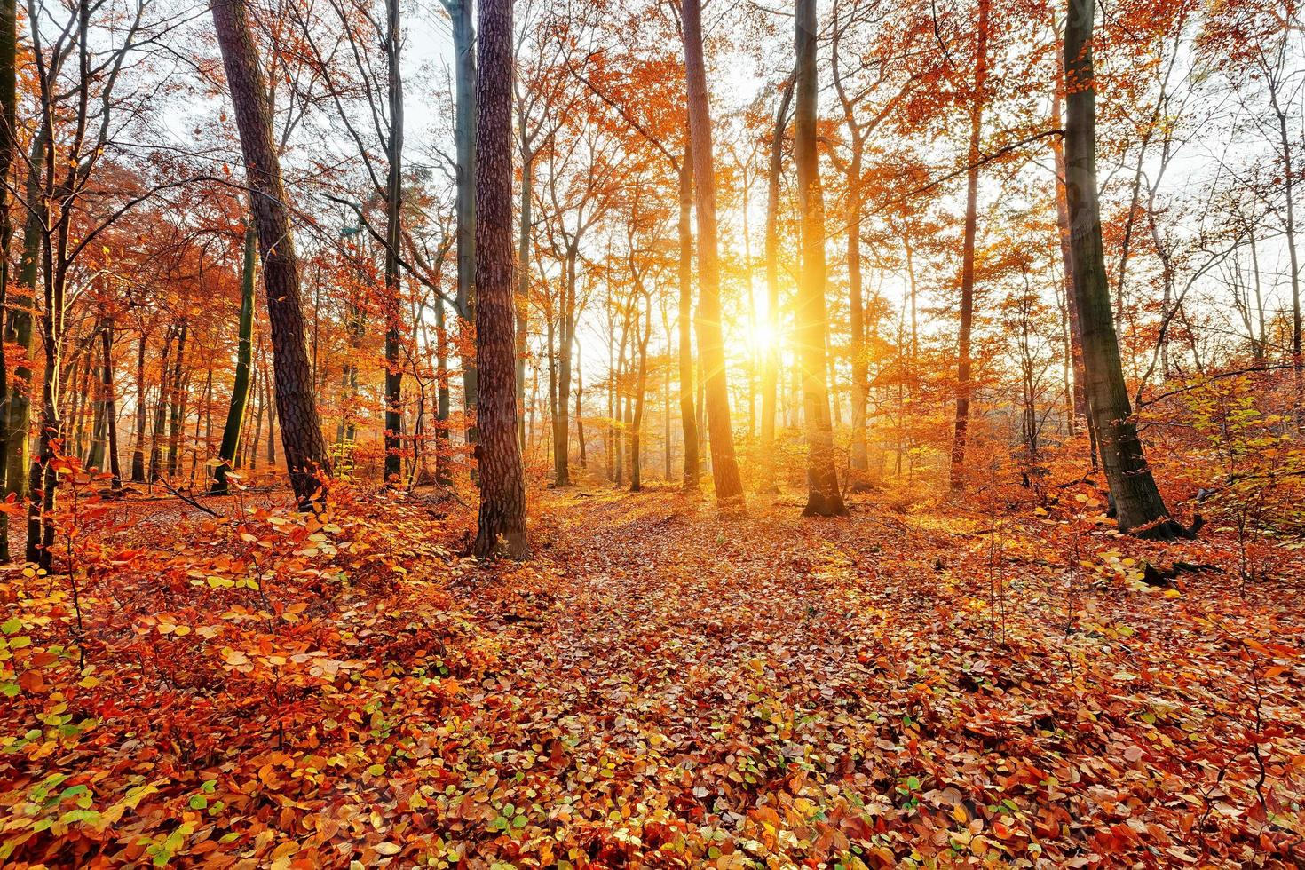 Sunlighted autumn forest photo