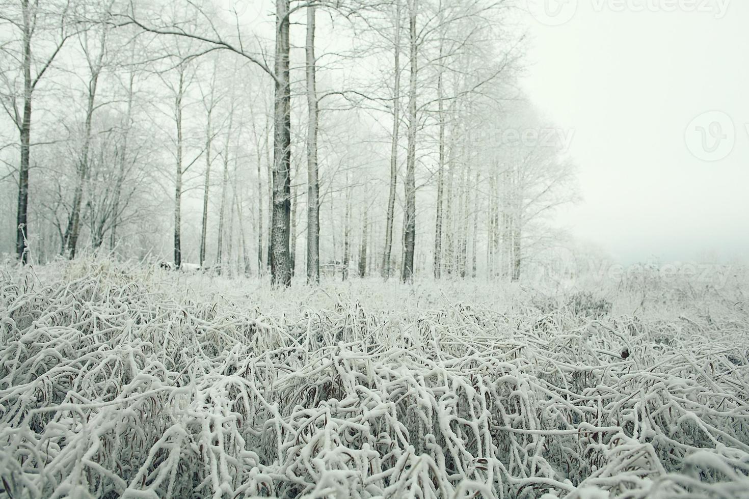 frosty winter landscape in snowy forest photo