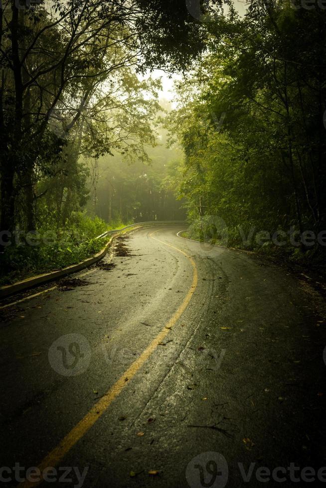 Camino a través del bosque oscuro con niebla foto