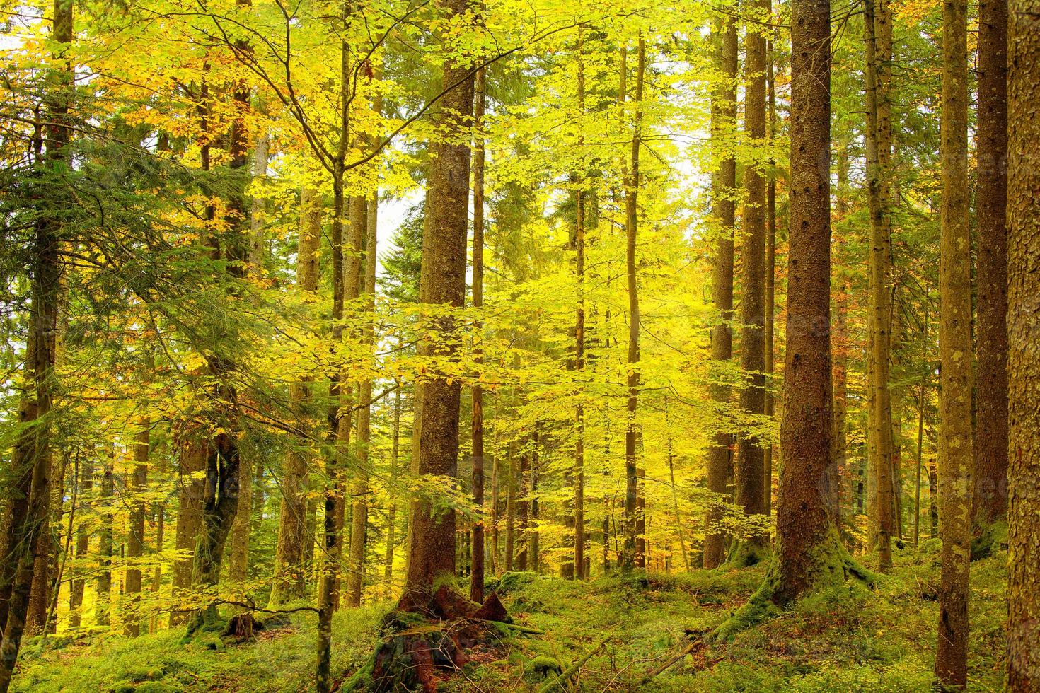 Golden autumnal forest photo