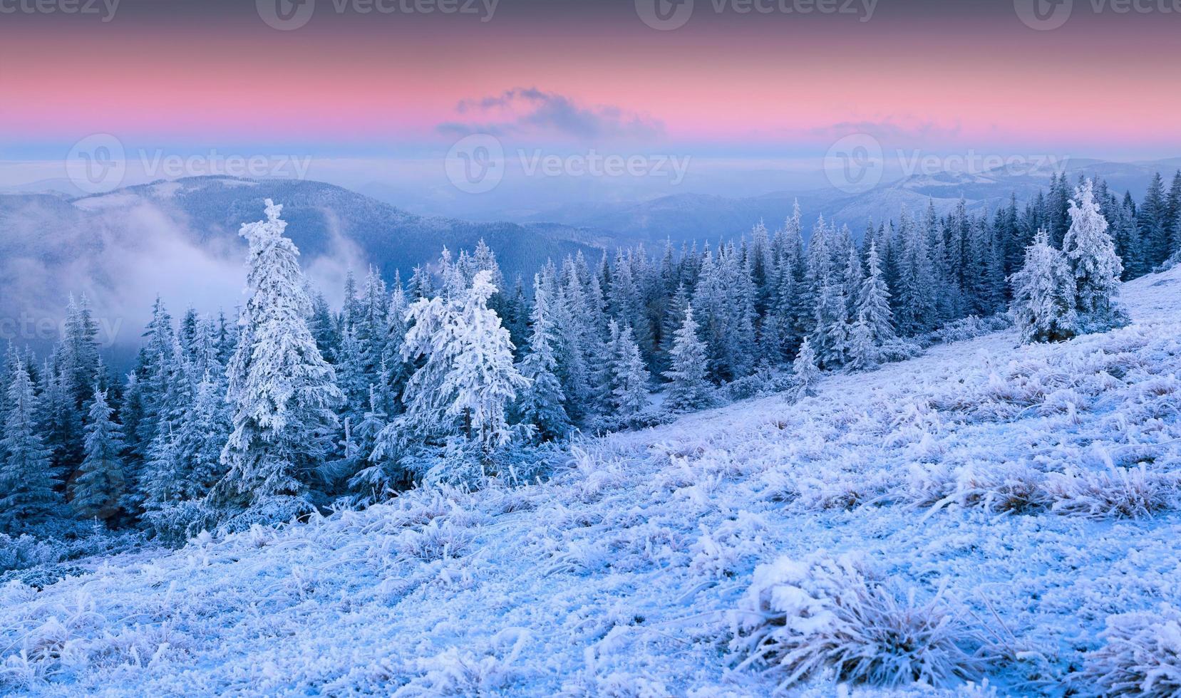 hermoso amanecer de invierno en el bosque de montaña. foto