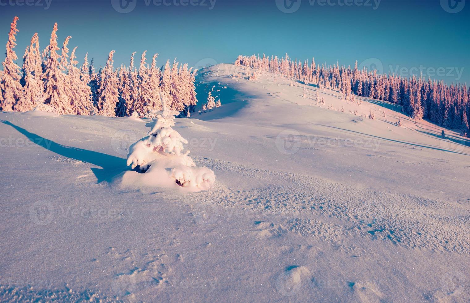 paisaje de invierno soleado en el bosque de montaña. foto