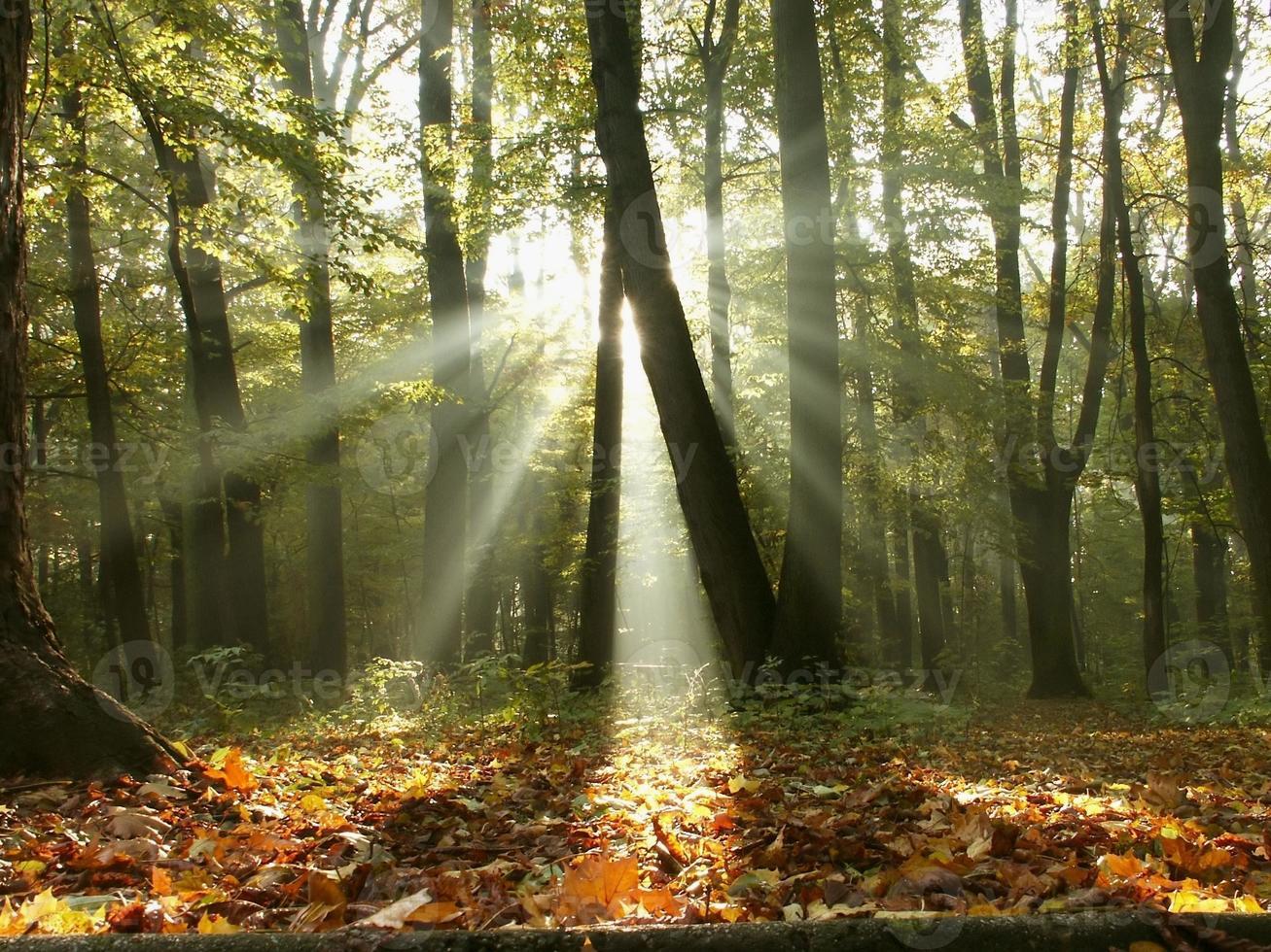 Misty autumn forest at sunrise photo
