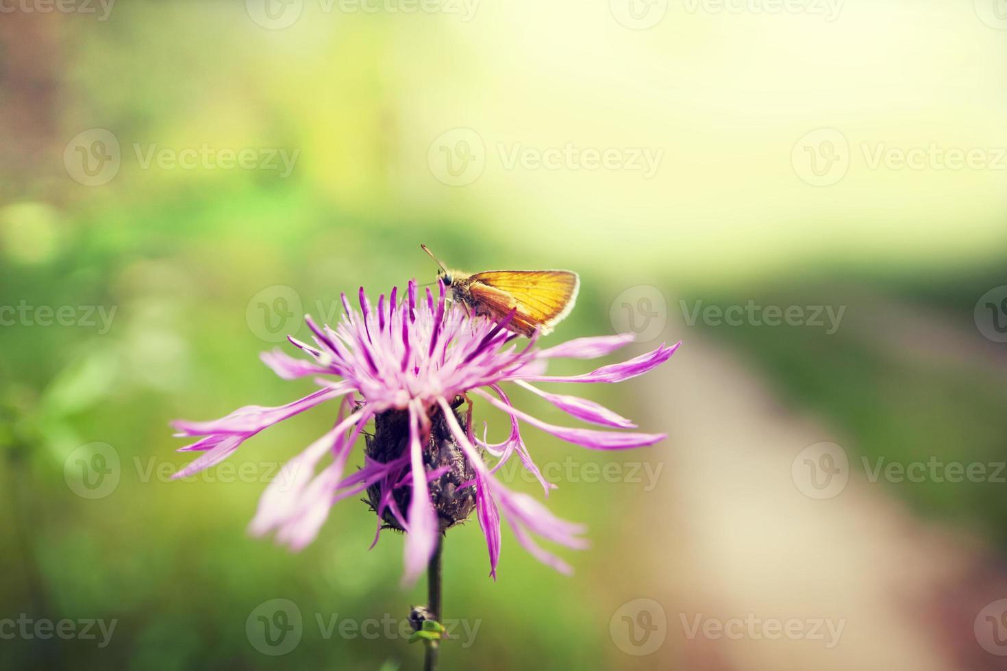 forest flower photo