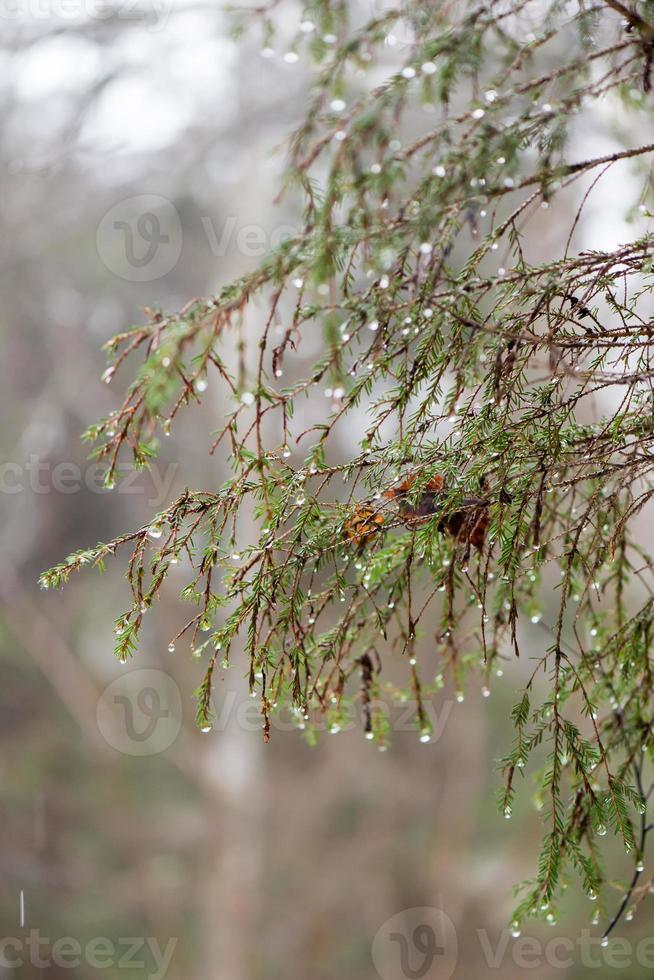 ramas de los árboles mojados en el bosque de invierno foto