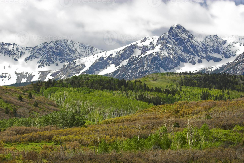 Telluride forest photo