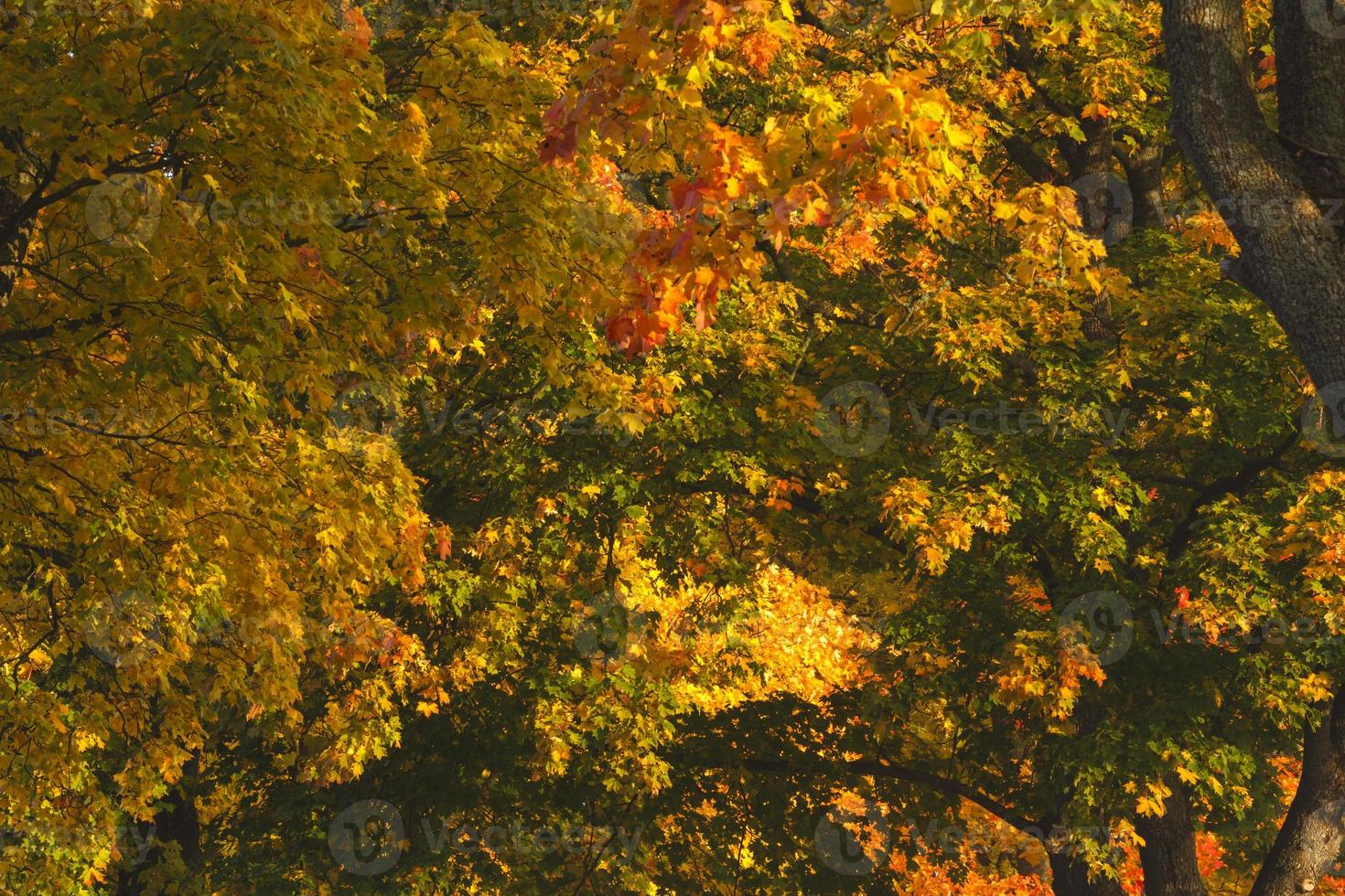 Colorful autumn forest photo