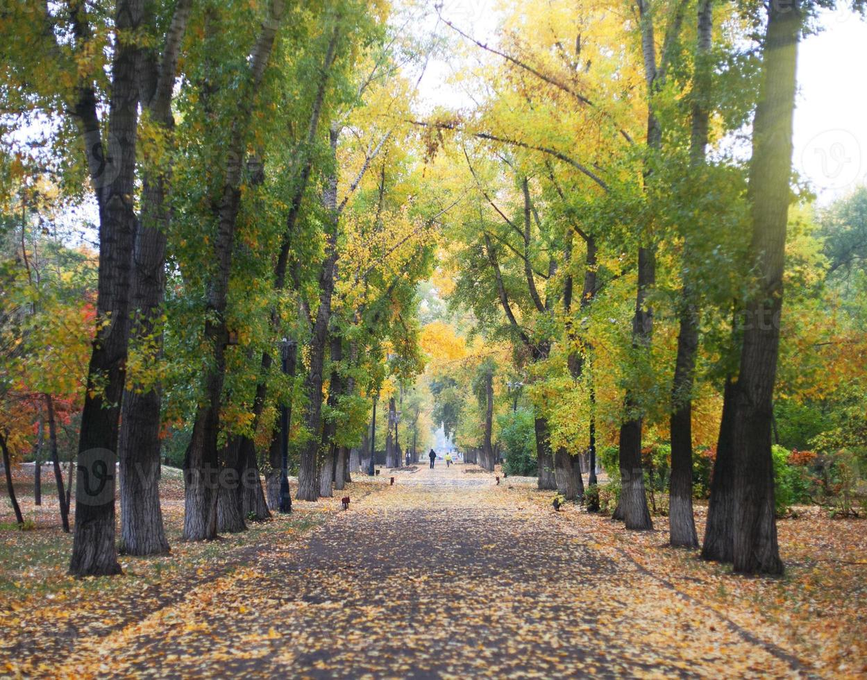 Beautiful autumn forest in national park photo