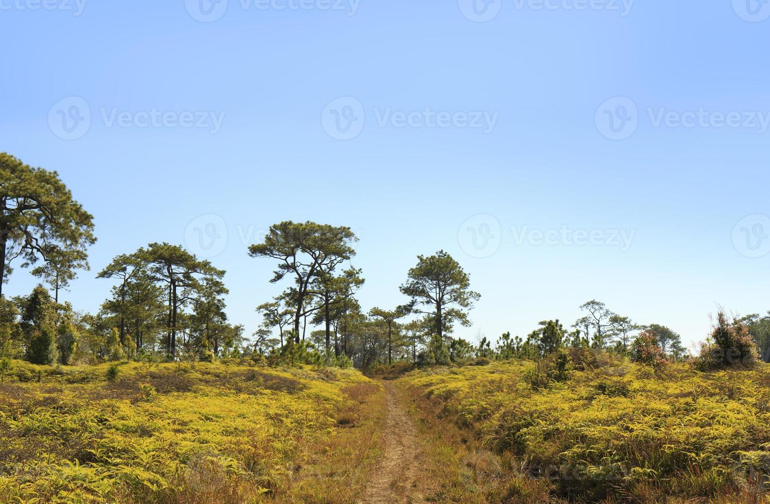 Difficulties forest path photo