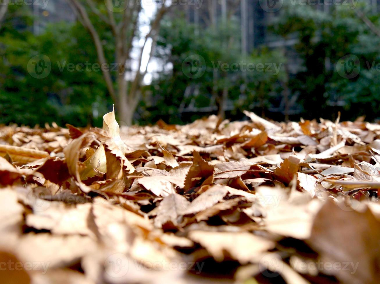 fallen leaves in the park photo