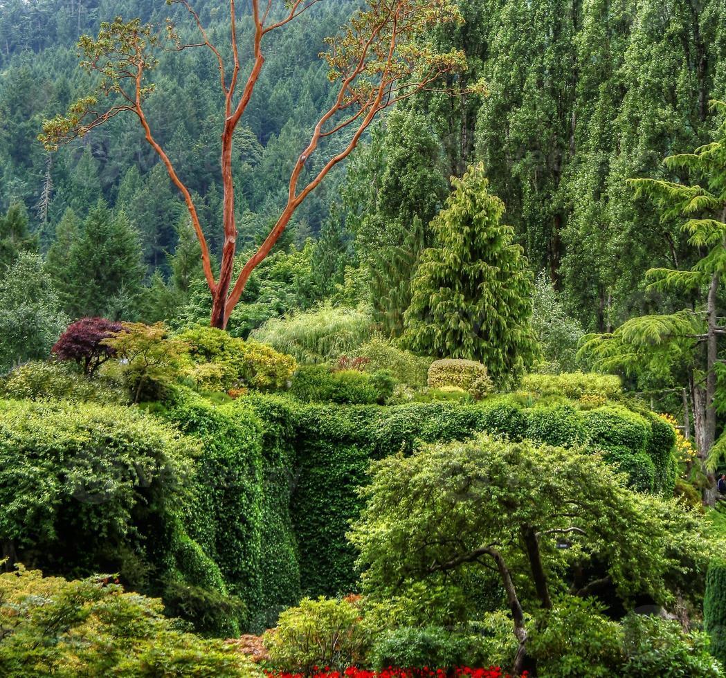 un paisaje hdr de un bosque y arbustos. foto