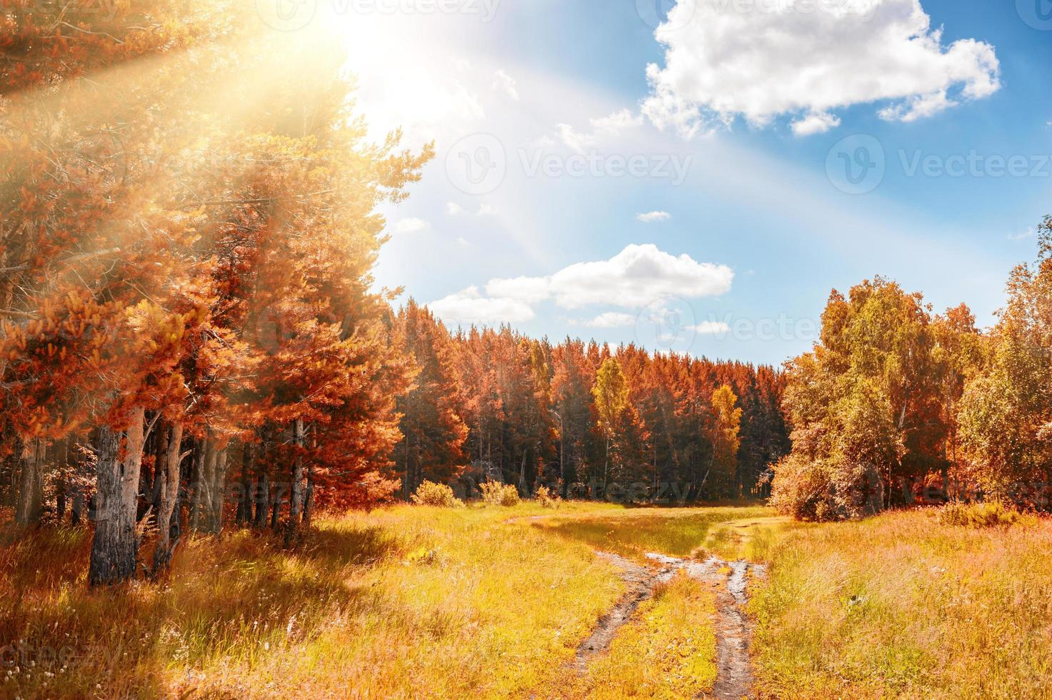 Beautiful autumn forest at sunny day photo