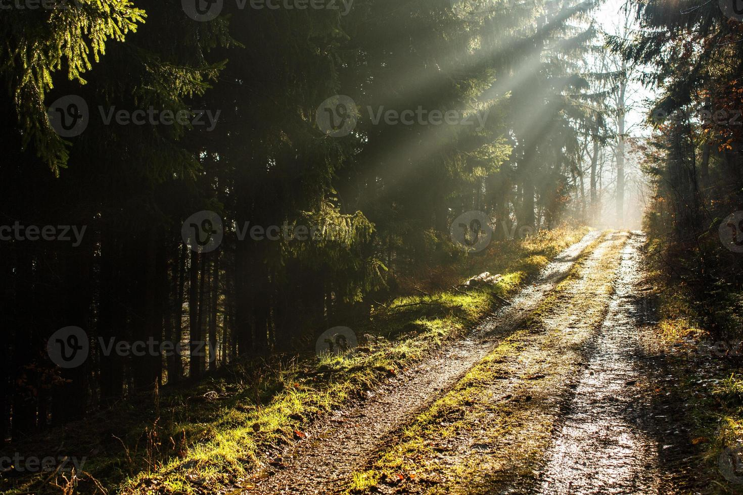 Forest path with lovely rays of sunlight photo