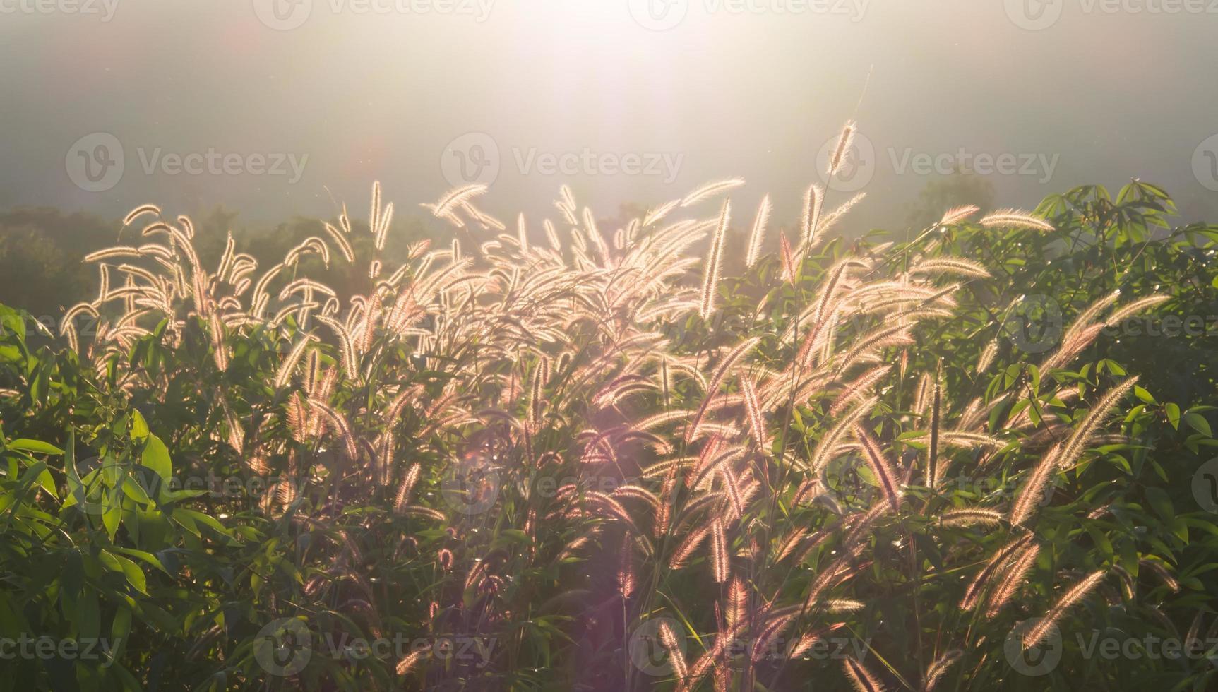 nature grass photo