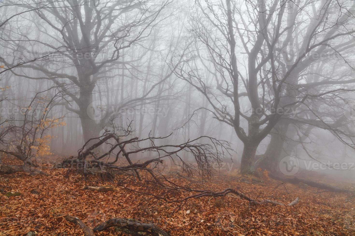 Mysterious foggy autumn forest on the mountain slope. photo