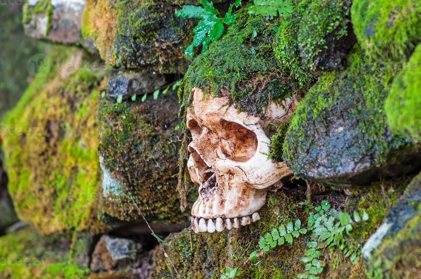 Skull on moss wall photo
