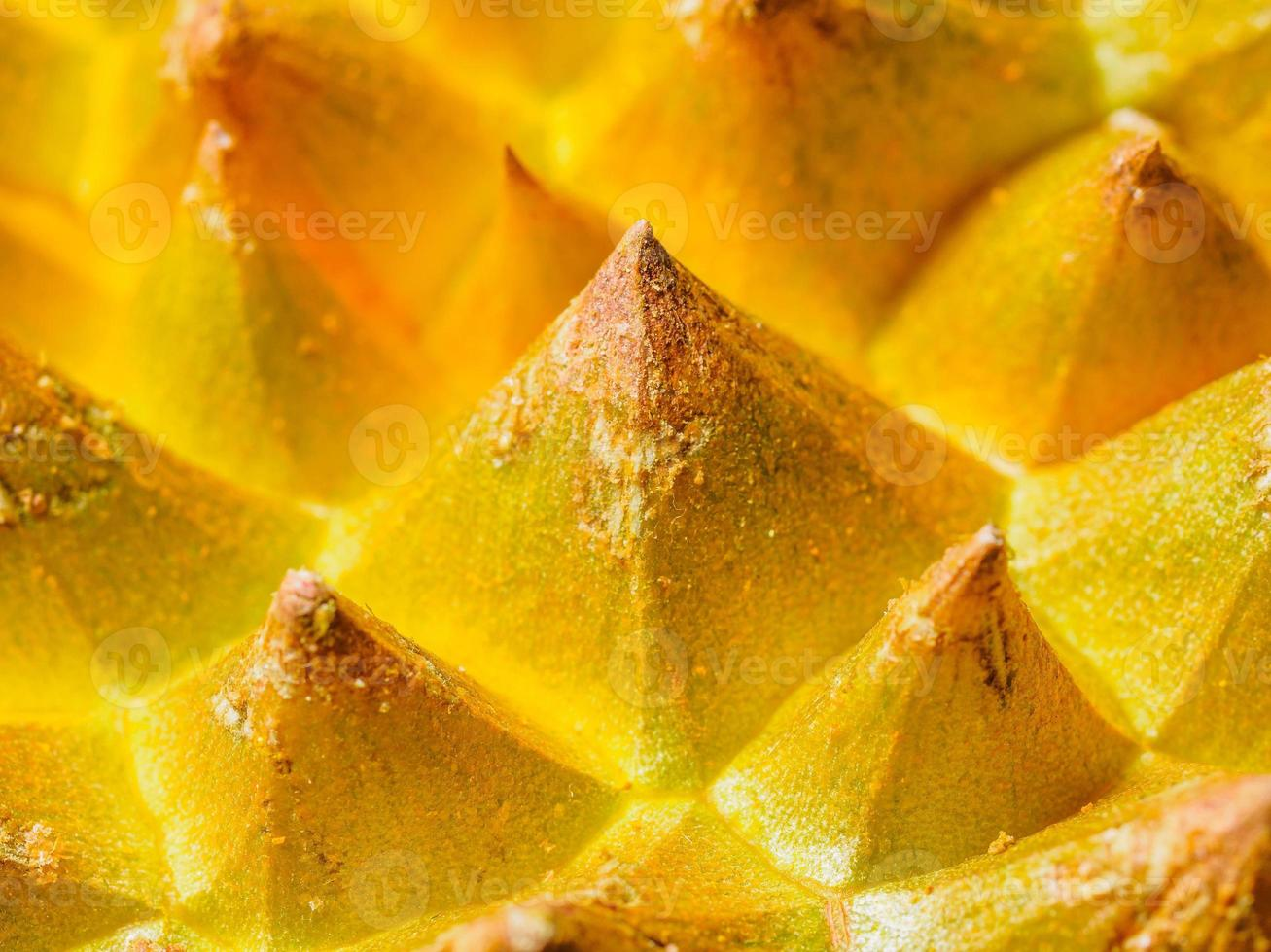 The rough skin of durian, like golden pyramid forest photo