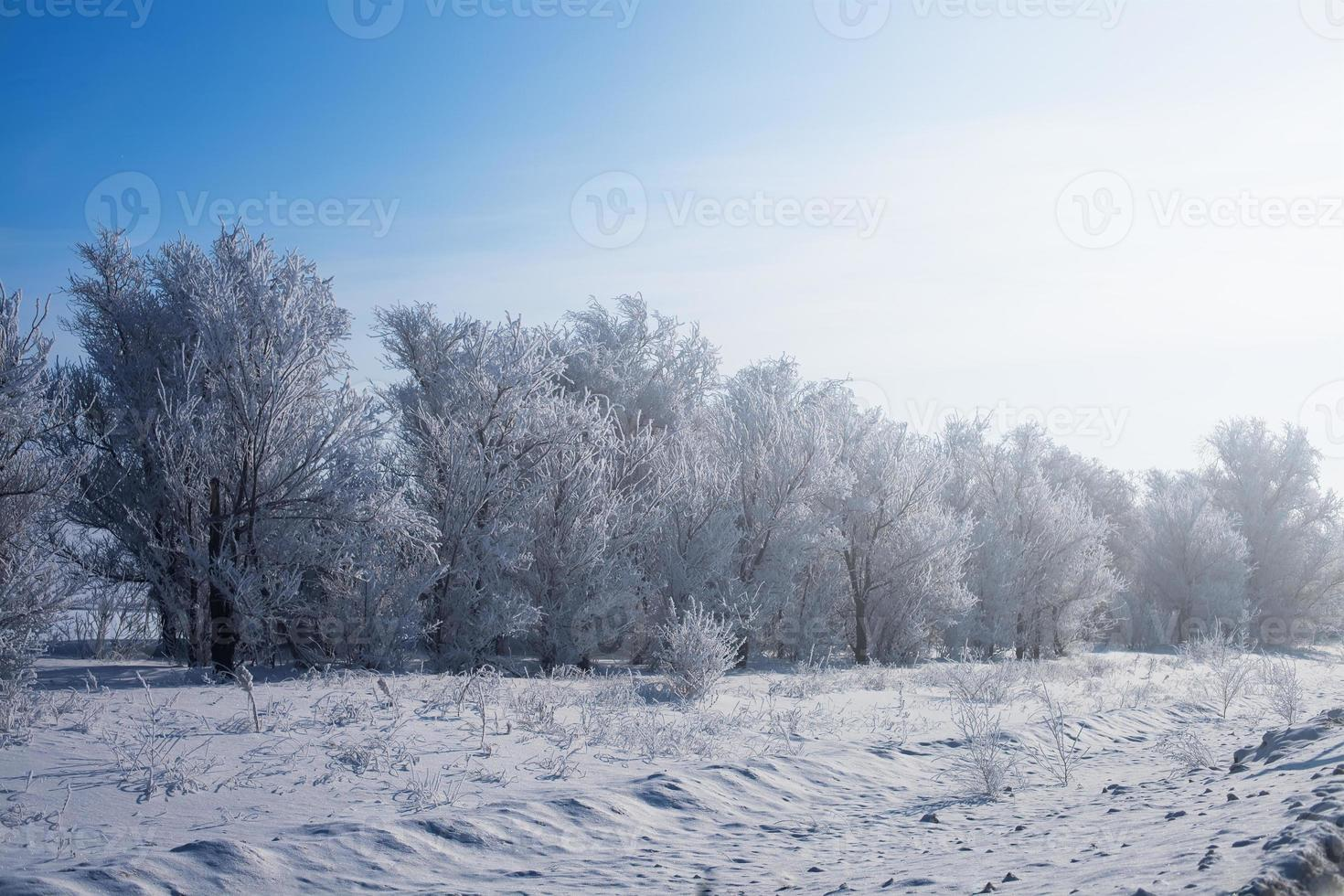beautiful winter landscape with road and snow-covered trees. photo