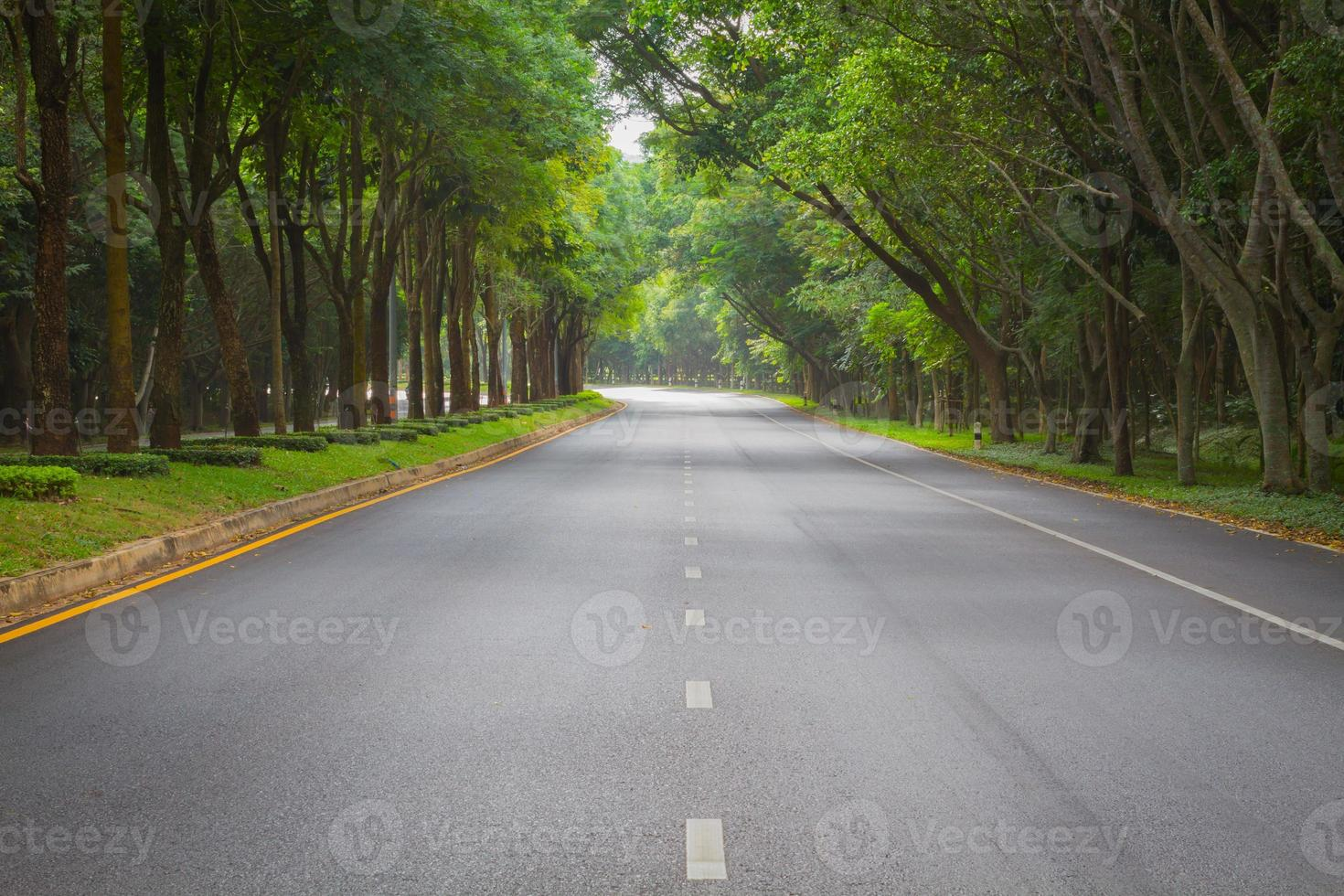 green tunel forest clean road in the early morning, Thailand photo