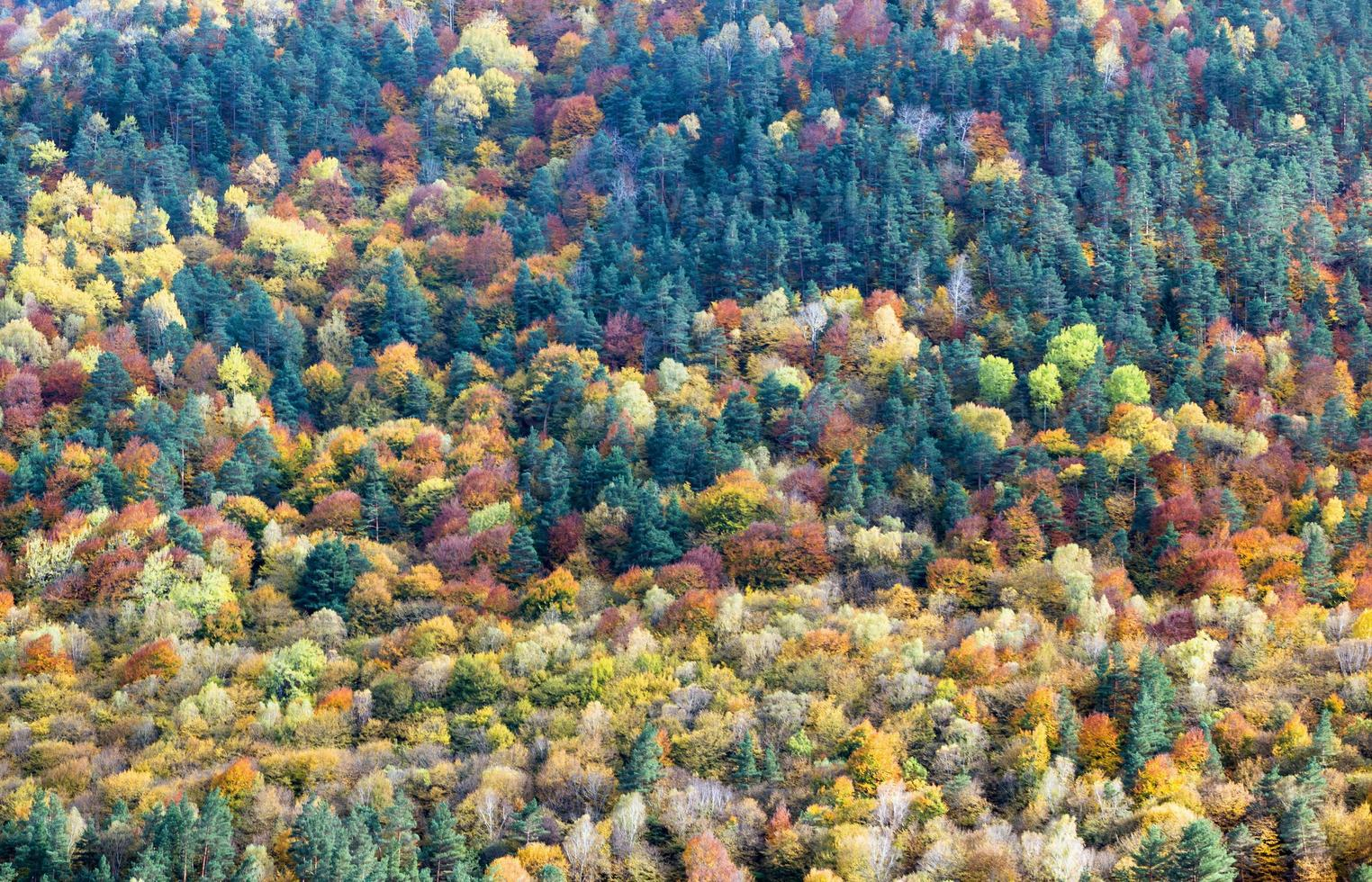 Background of yellow and orange trees in autumn in a forest photo