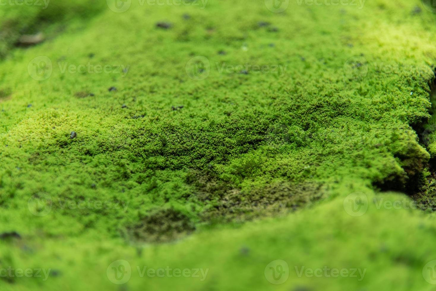 nature moss photo