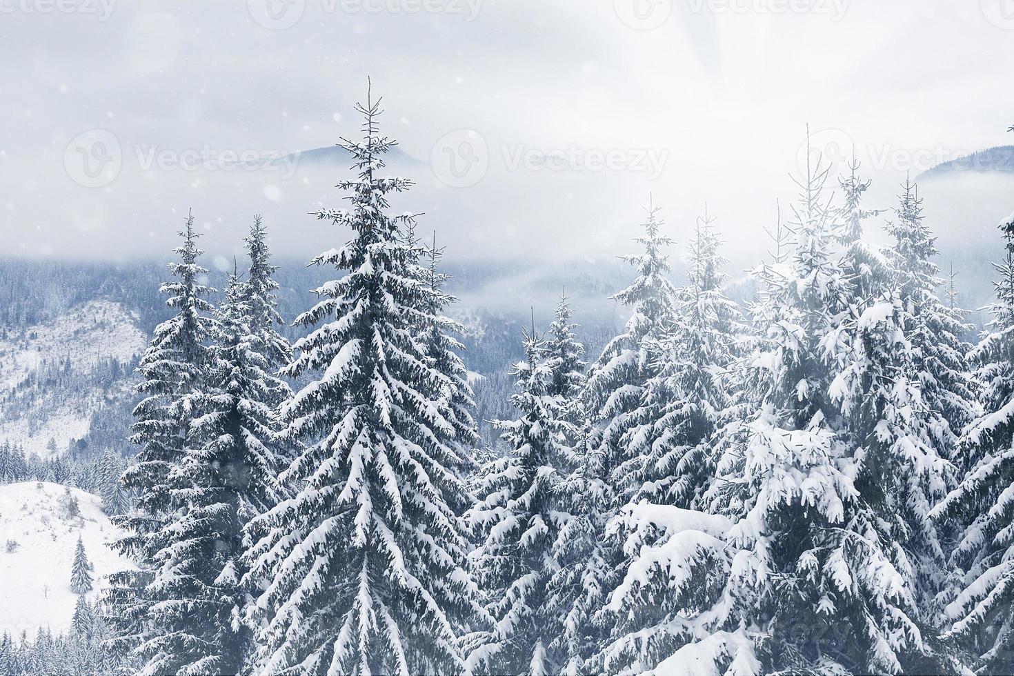 Arboles cubiertos con escarcha y nieve en las montañas foto