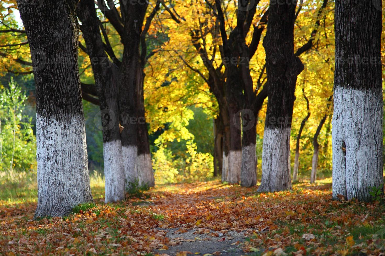 Autumn trees and alley photo