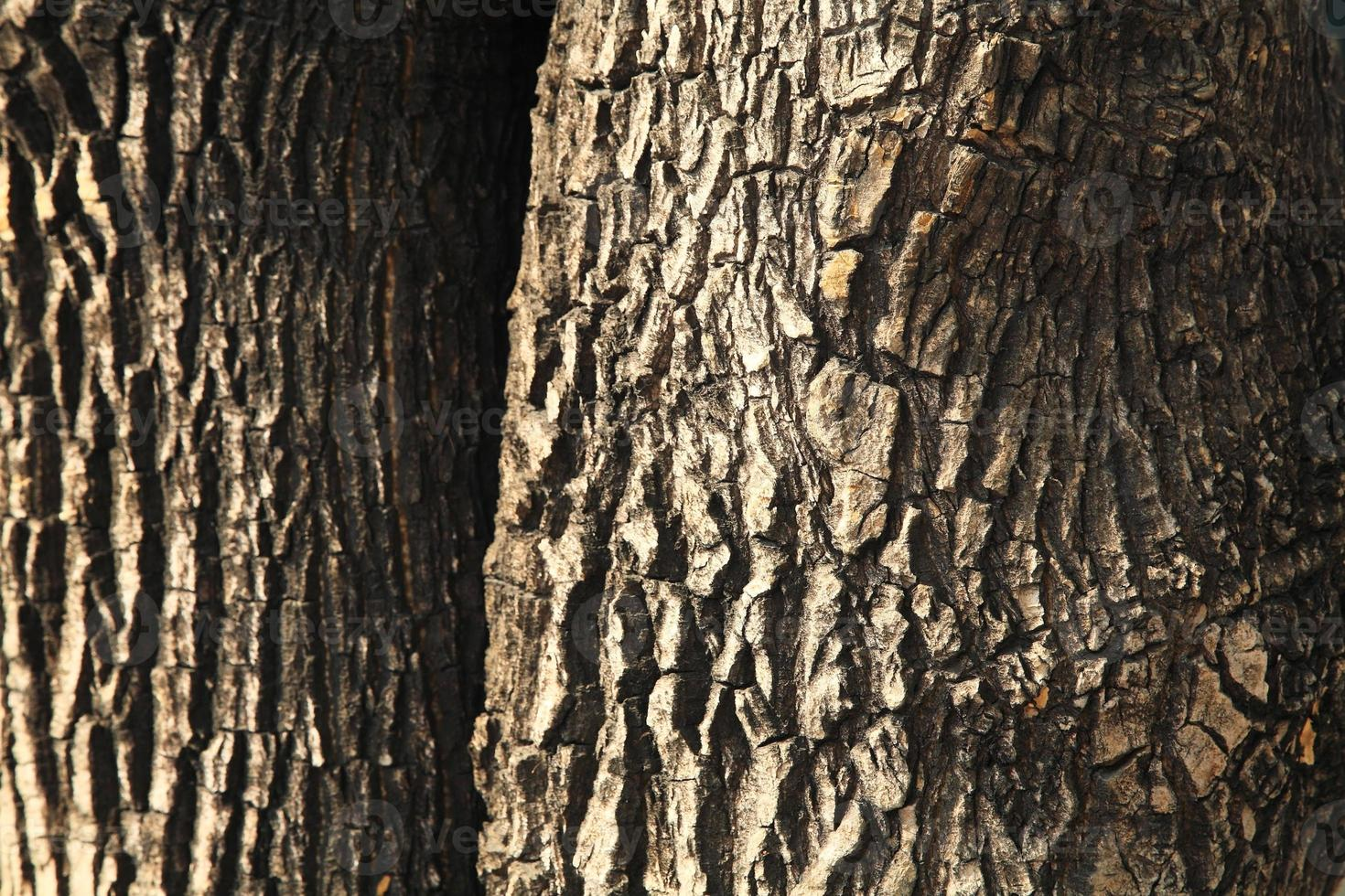Old tree bark texture photo