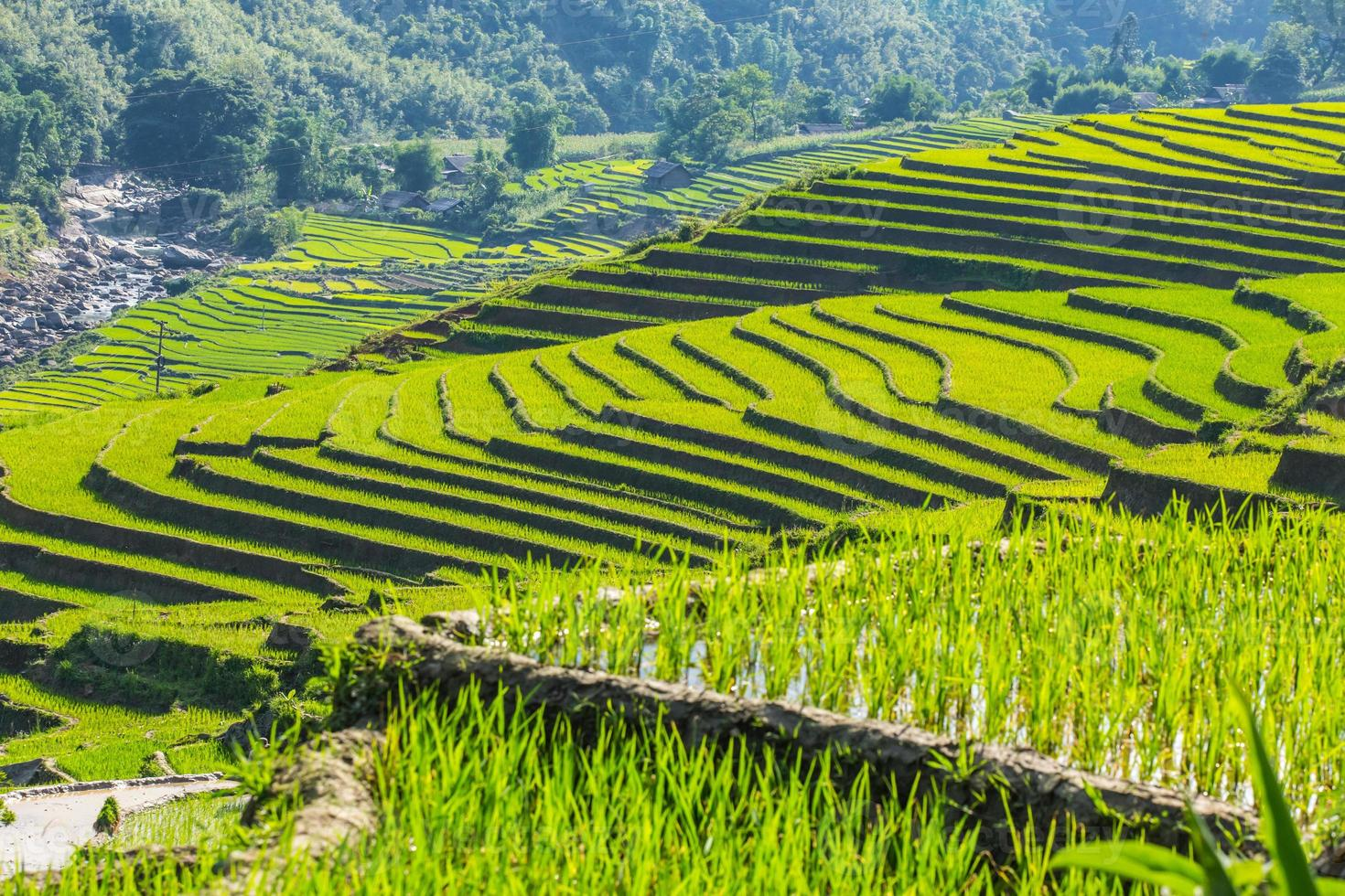 Valley among the rice terraces. photo