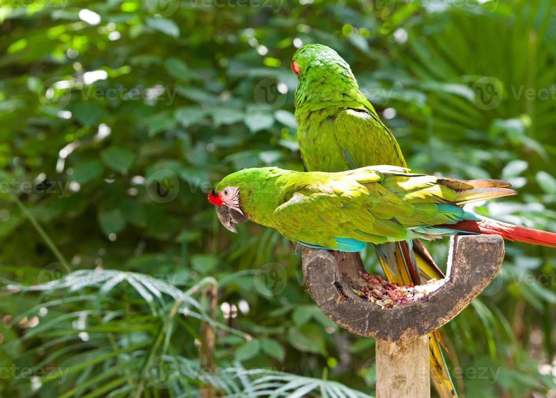 loros tropicales grandes y brillantes se sientan en una rama y se comunican foto