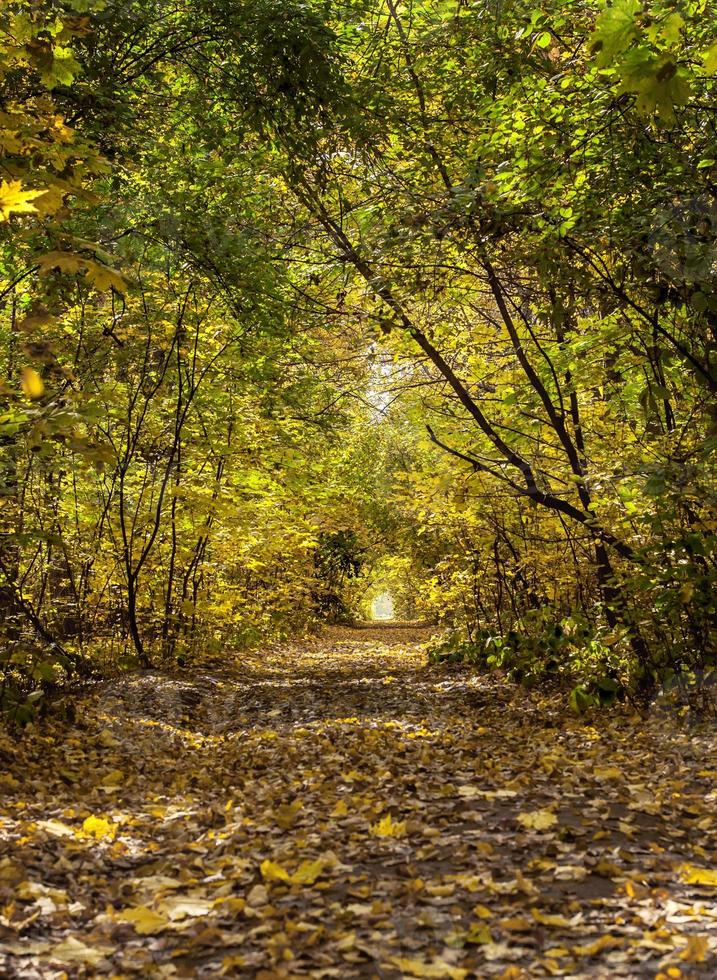 beautiful  colorful tree alley in forest, autumn natural backgro photo
