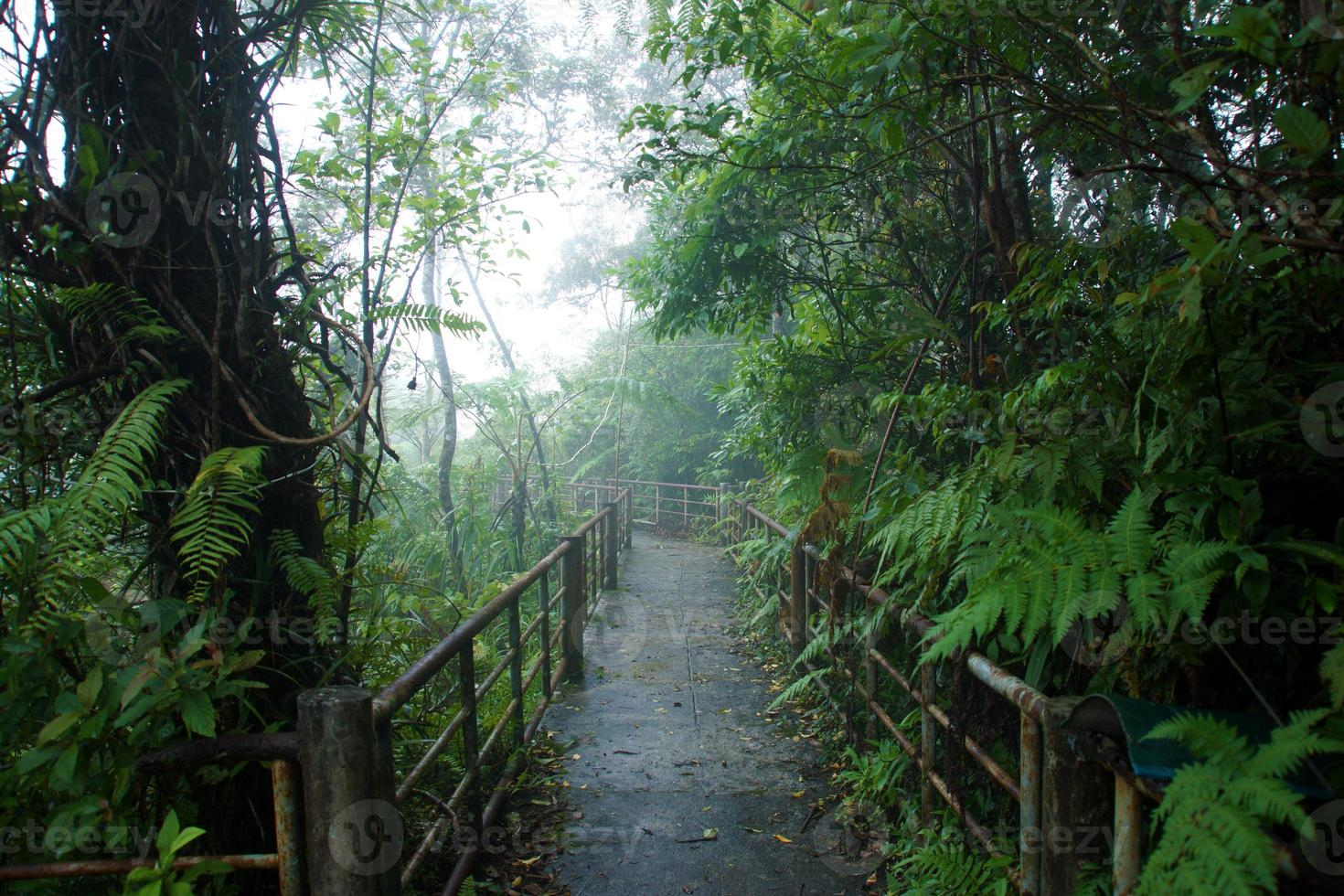 Nature walk in the rain forest and cloud cover. photo
