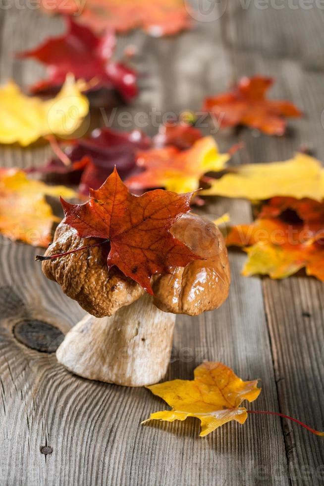 White Mushroom (cep) photo