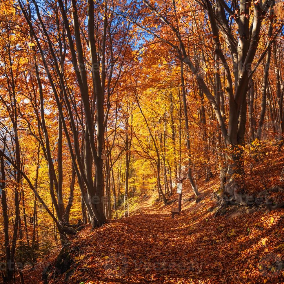 Colorful Trees In Autumn photo