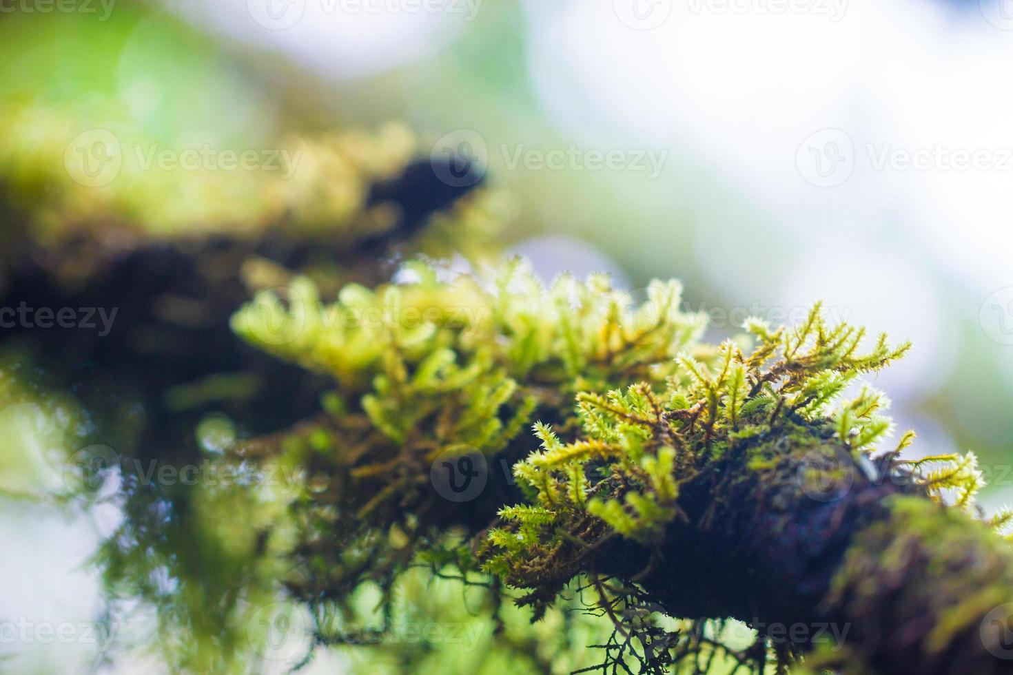 Leaf on Moss background photo
