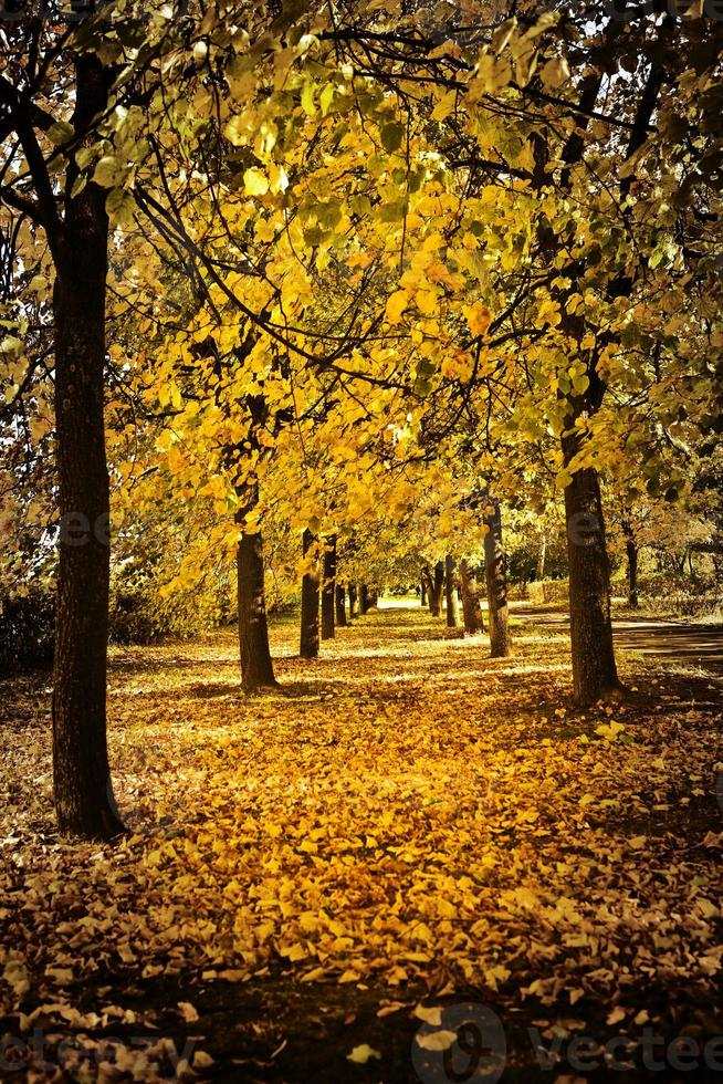 autumn alley photo