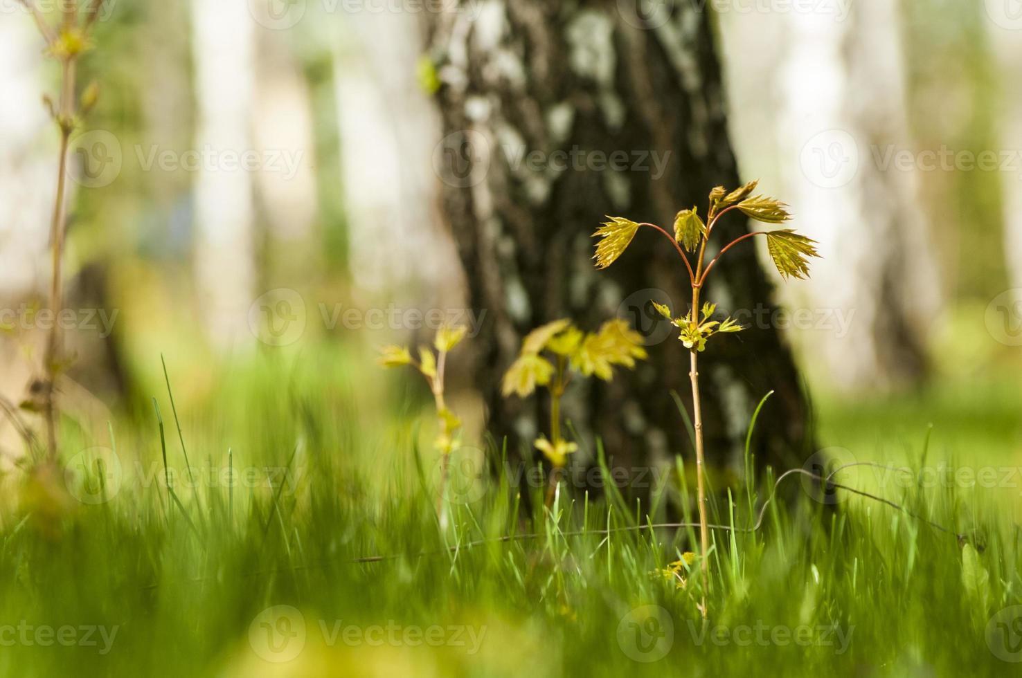 spring atmosphere photo