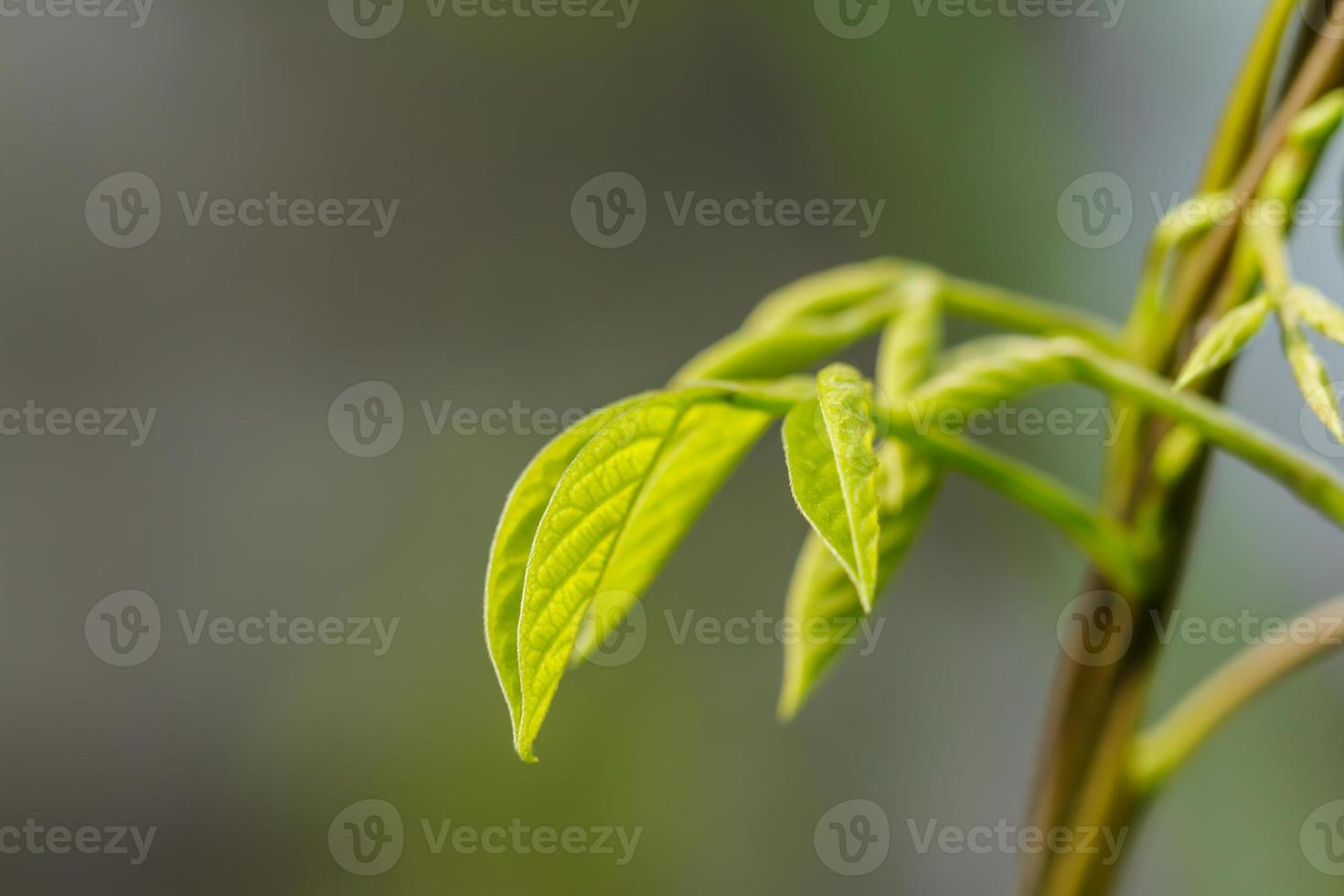 Leaves of trees photo