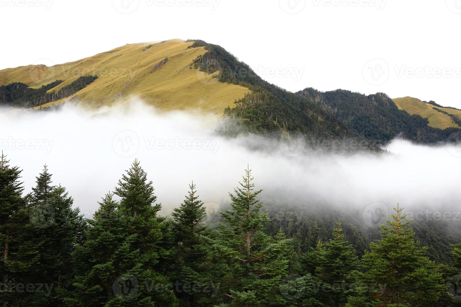 high mountain scenery with tree and clouds photo