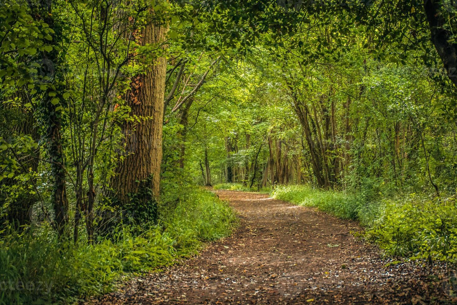 trail through the woodland photo
