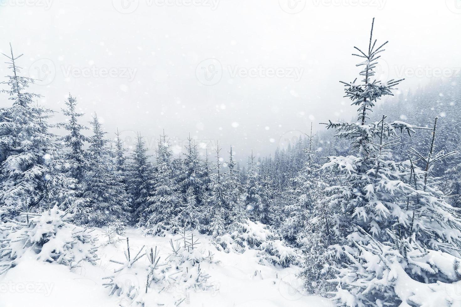 Spruce Tree foggy Forest Covered by Snow in Winter Landscape. photo