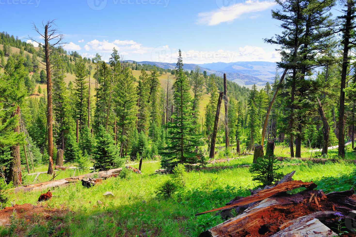 Blacktail Plateau in Yellowstone National Park, Wyoming in summer photo