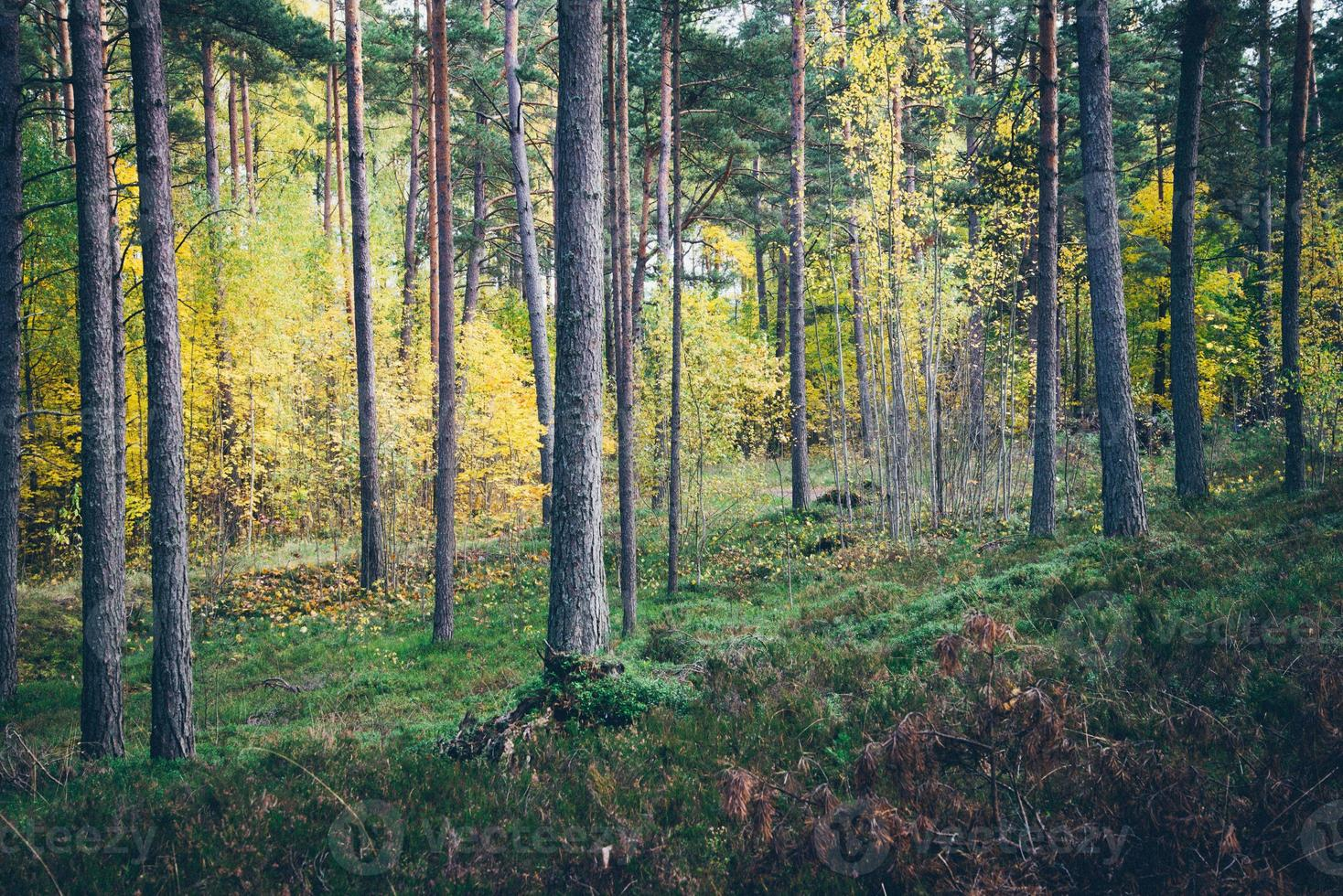 colorful autumn trees in green forest with sun rays. Retro photo